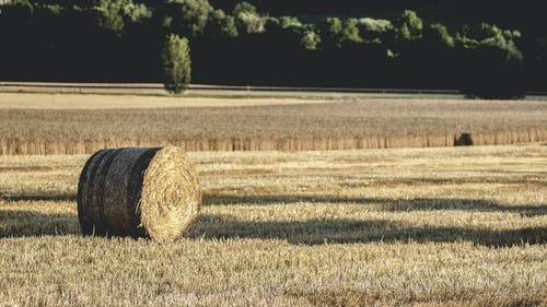 Gratis stockfoto met akkerland, balen hooi, boerderij, boerenbedrijf