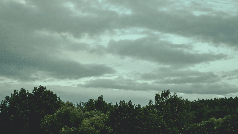 Immagine gratuita di alberi, ambiente, boschi, cielo