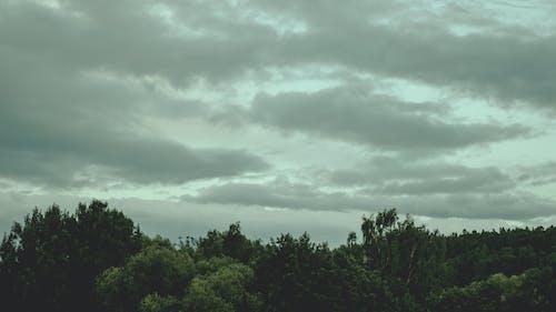 Kostenloses Stock Foto zu bäume, bewölkt, dunkle wolken, düster