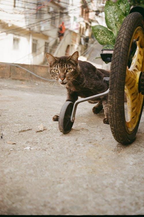 araba, araç, bisiklet, Evcil Hayvan içeren Ücretsiz stok fotoğraf
