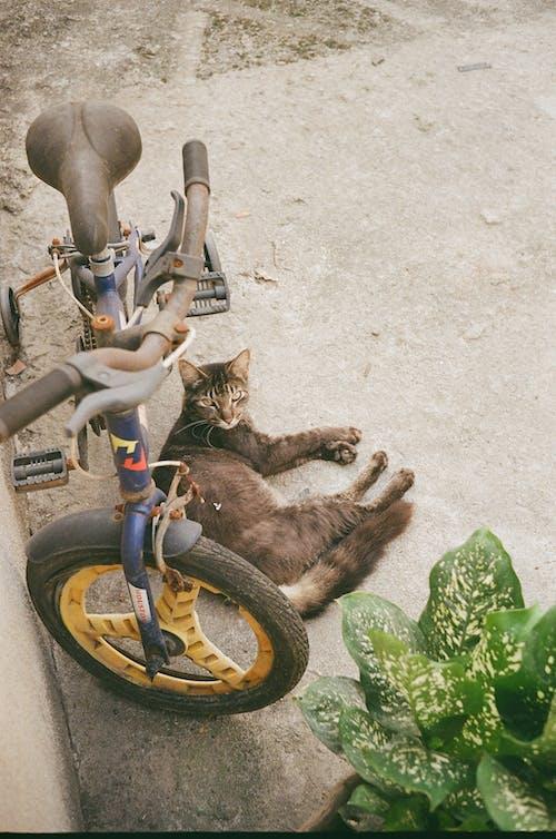 açık hava, Bahçe, bisiklet, çocuk içeren Ücretsiz stok fotoğraf