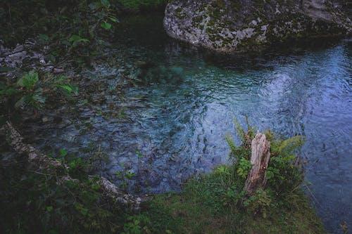 Immagine gratuita di acqua, ambiente, armonia