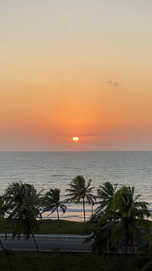 Green Palm Tree Near Sea during Sunset