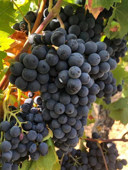 Close-Up Photo of Cluster of Grapes