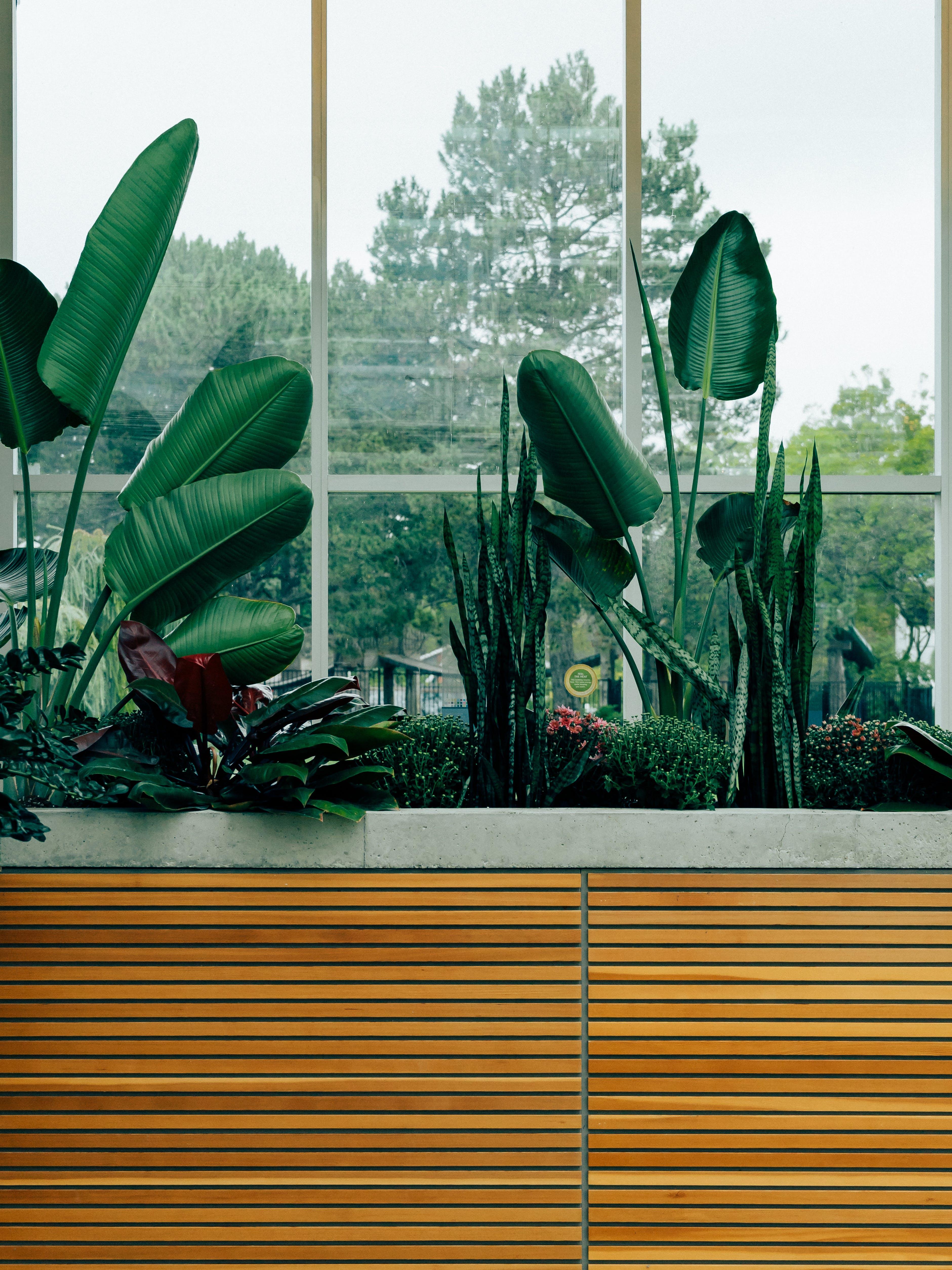 Green Lead Plant Near Glass Window