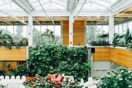 bitkiler, dizayn, mimari tasarım, orman içeren Ücretsiz stok fotoğraf