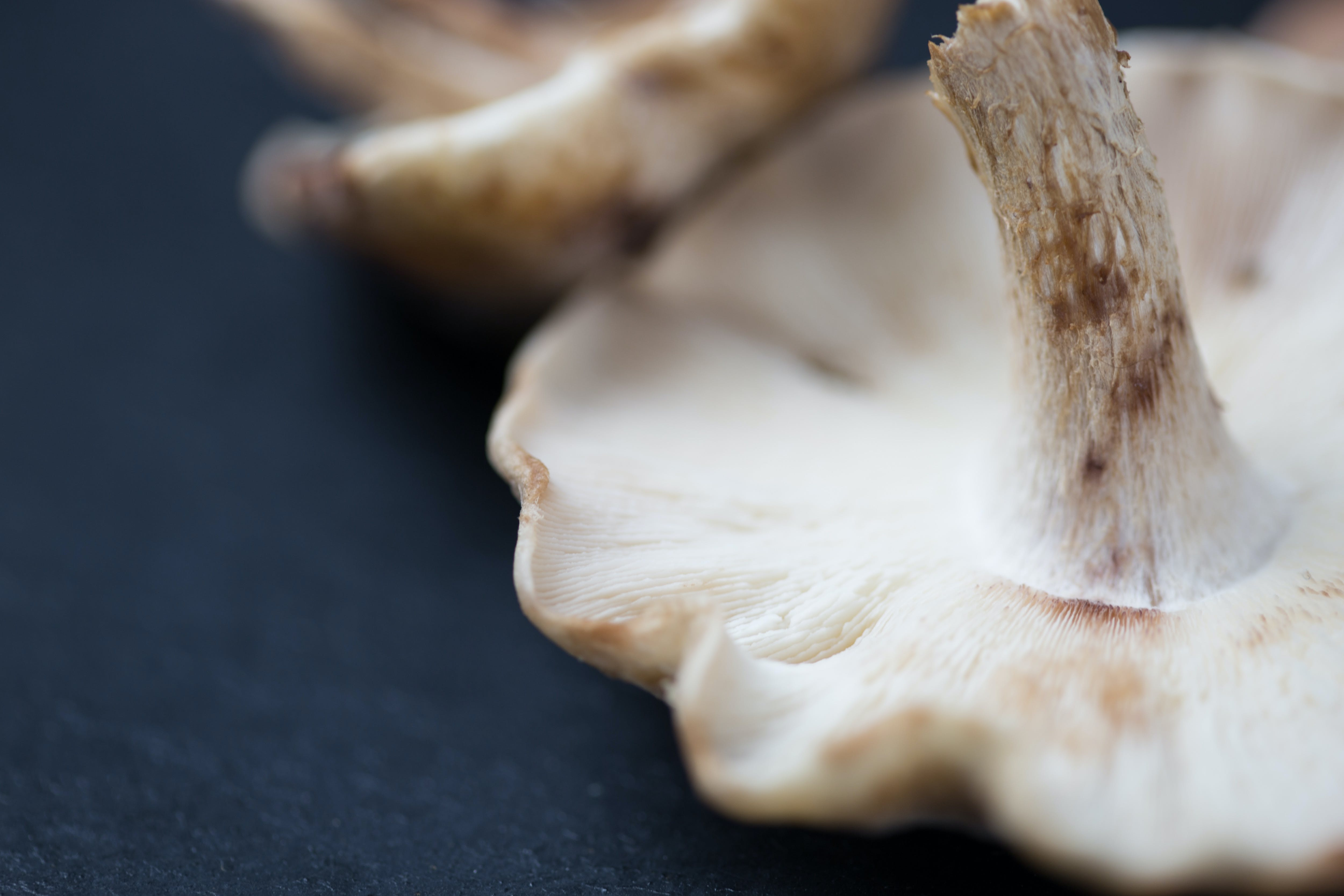 Gratis stockfoto met binnen, biologisch, champignons, close-up