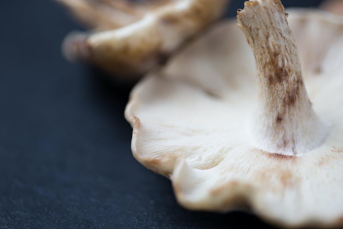 Základová fotografie zdarma na téma čerstvý, houby, ingredience