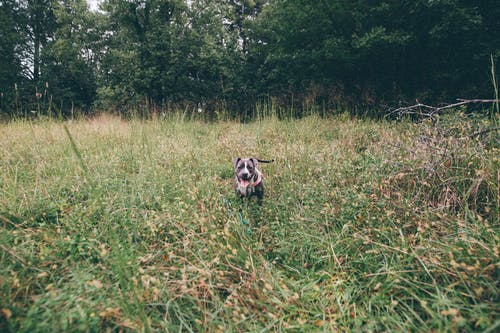 Curious purebred dog standing on grassy ground in forest