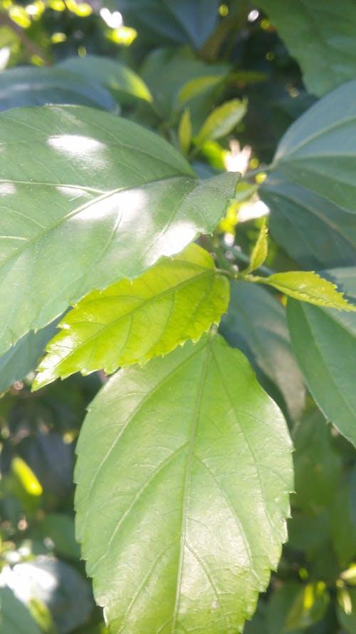 Yaprak içeren Ücretsiz stok fotoğraf