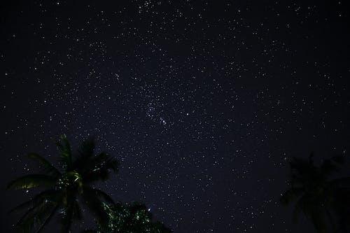 Palm Tree Under Starry Night