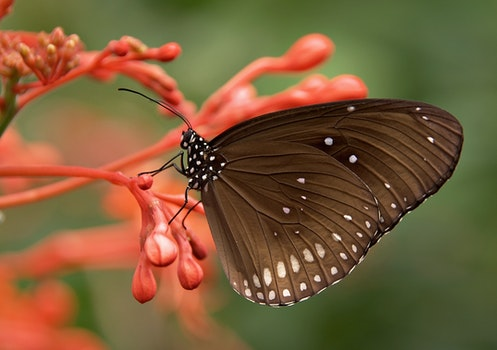 Black and White Butterfly on Red Flower