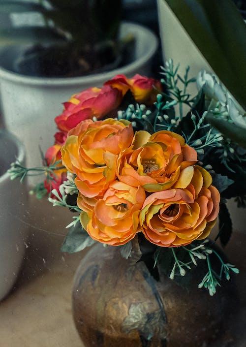 Free stock photo of autumn, autumn color, bloom