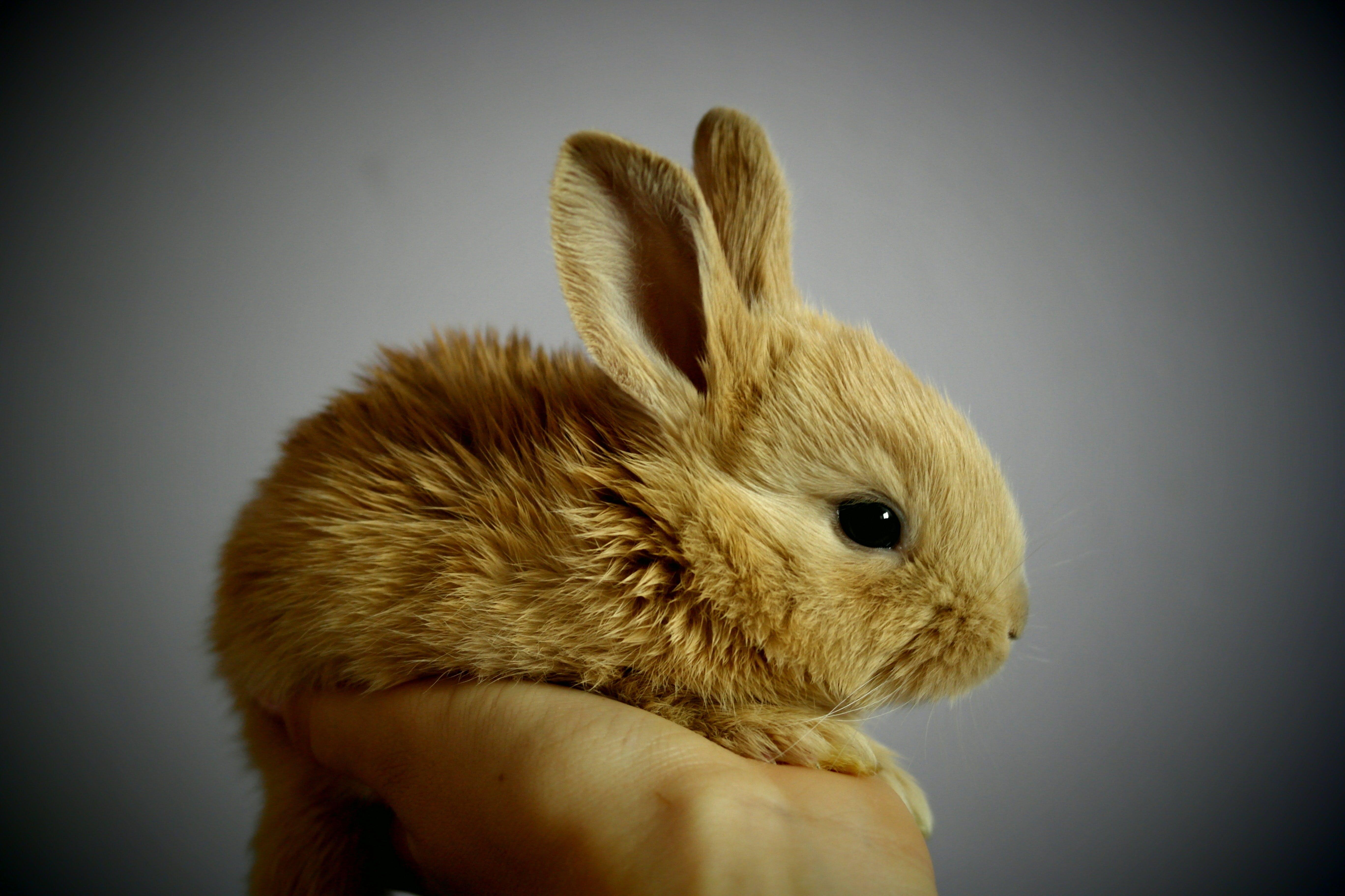 Foto profissional grátis de animal, bonitinho, coelho, detalhe