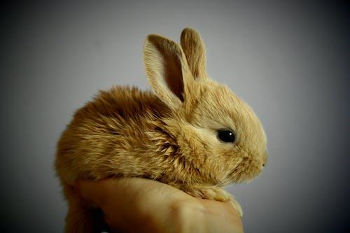 Gratis arkivbilde med detalj, hånd, hare, kanin