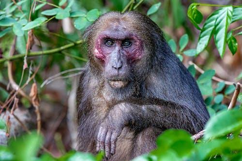 Close-Up View of a Monkey Looking at Camera