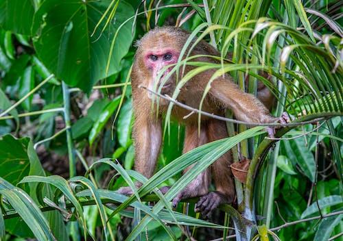 Monkey on a Plant