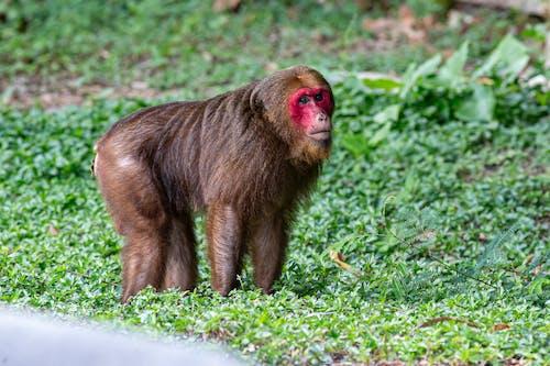 A Monkey on Green Grass