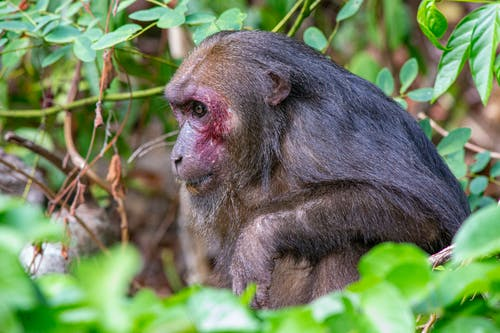 Close-Up View of a Monkey