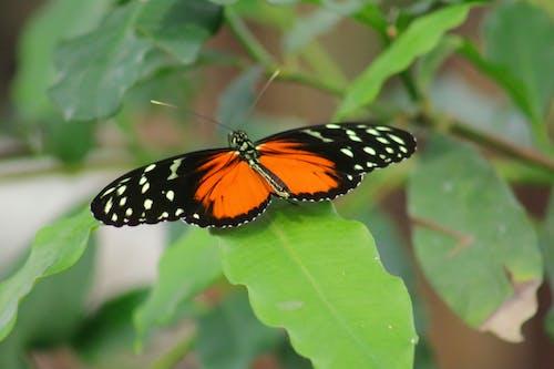 böcek, doğa, kelebek içeren Ücretsiz stok fotoğraf