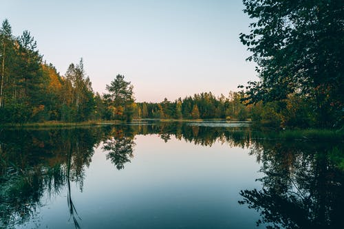Pure pond among autumn trees under light sky