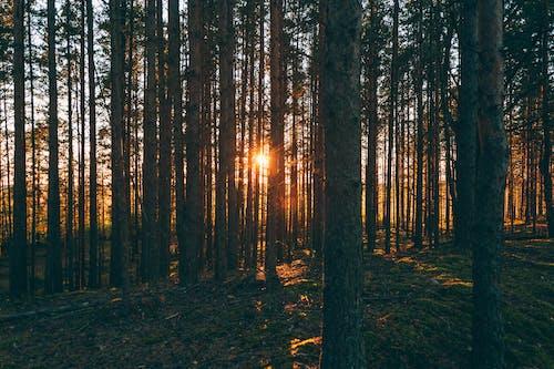 Imagine de stoc gratuită din arbore, arid, botanică