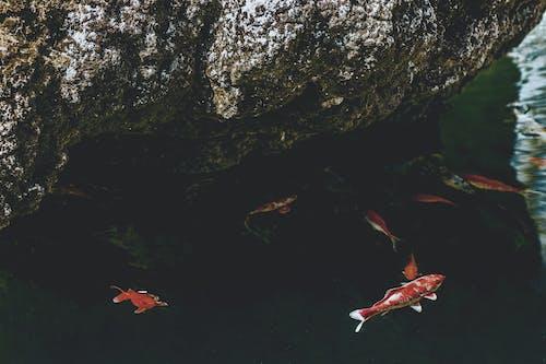 Бесплатное стоковое фото с вода, действие, дневной свет, окружающая среда