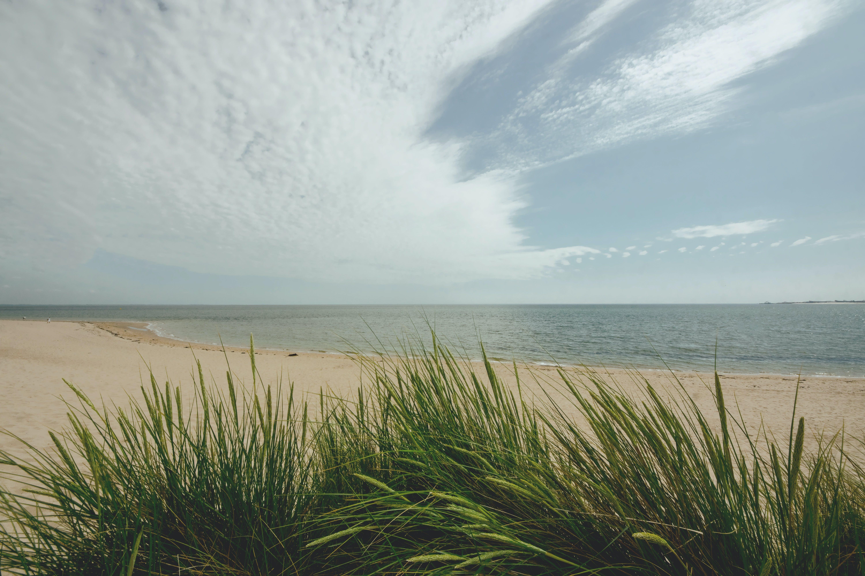 Δωρεάν στοκ φωτογραφιών με ακτή, άμμος, γαλήνιος, γρασίδι