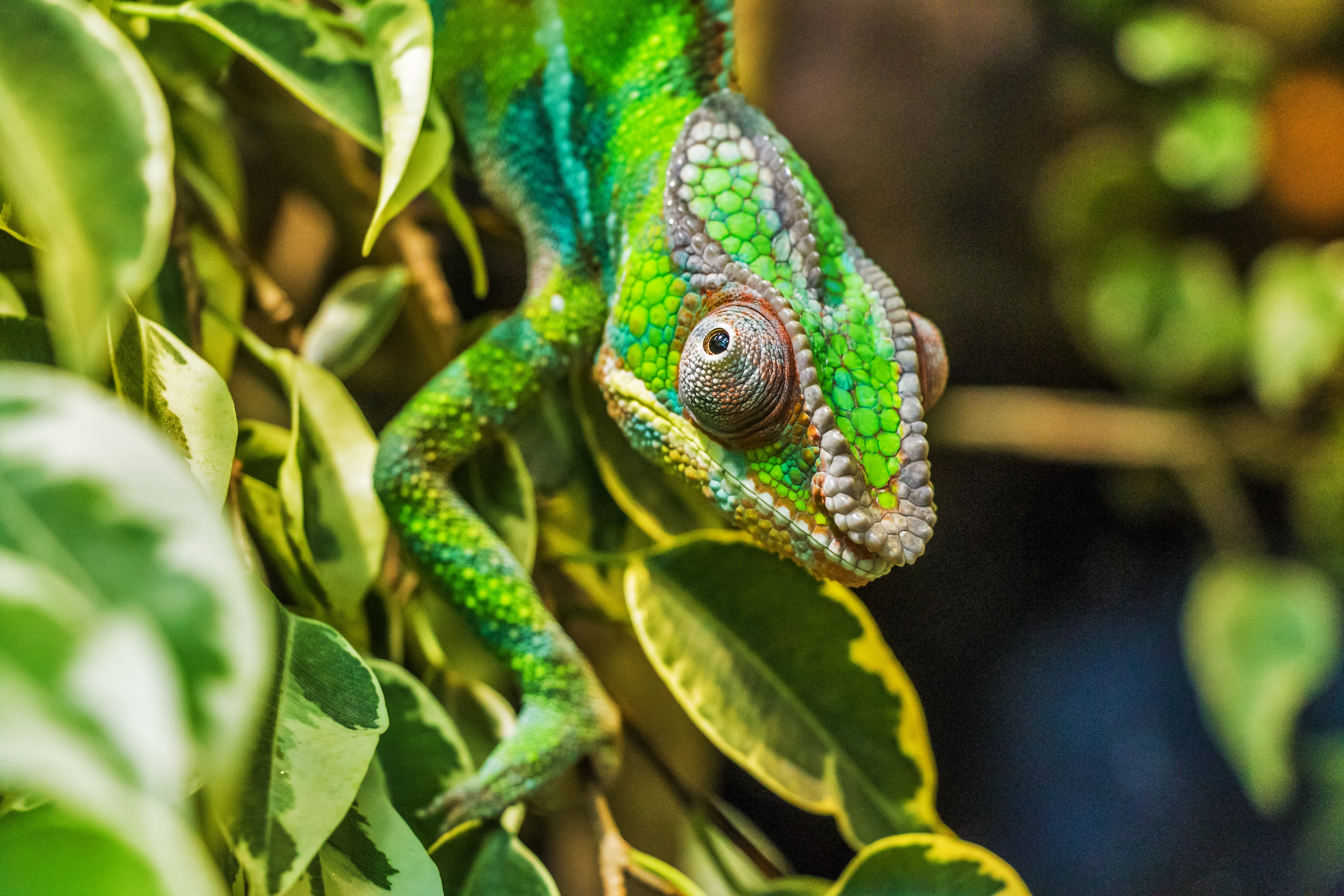 Green Reptile on Green Leaf