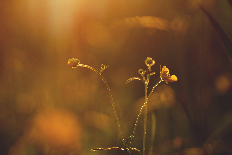 Selective-focus Photography of Orange Petaled Flower