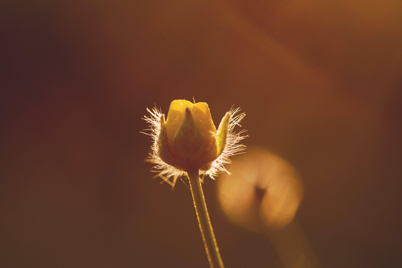 Free stock photo of light, nature, summer, garden