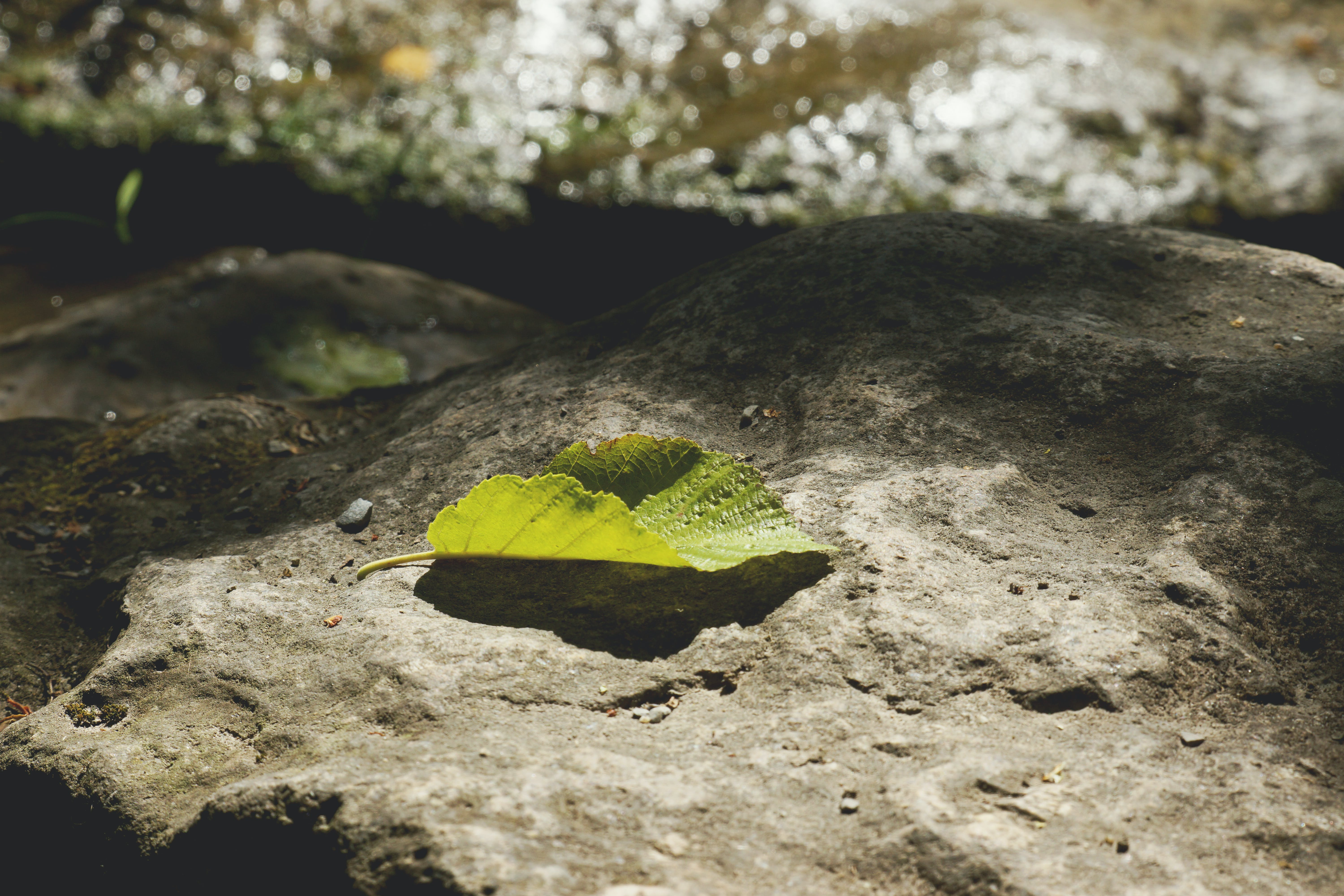 Free stock photo of leaf, light and shadow, nature, rock