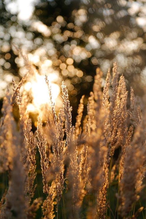 Gratis lagerfoto af close-up, dybde, græs, nærbillede
