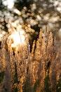 grass, plant, close-up