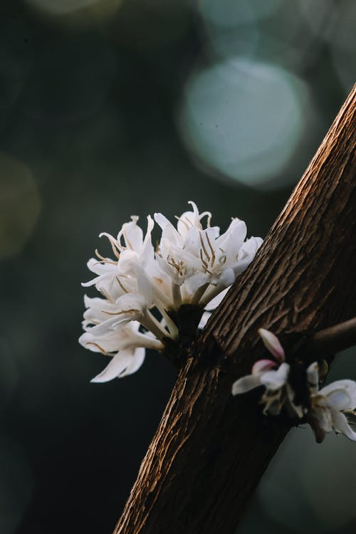 Close-Up View of White Flowers on a Tree Trunk