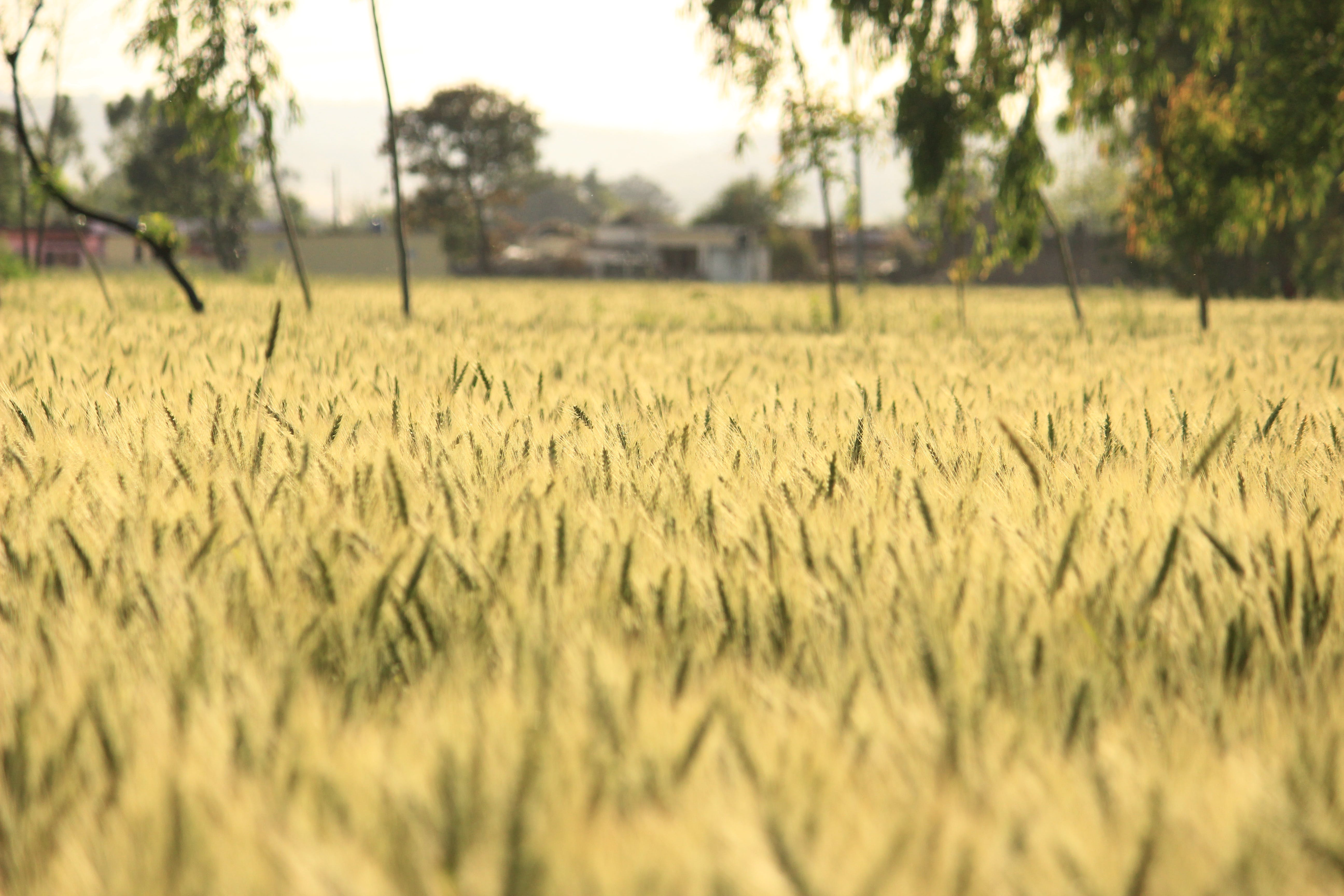 agricultural, agriculture, blur