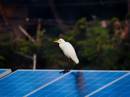 White Bird on Blue Surface