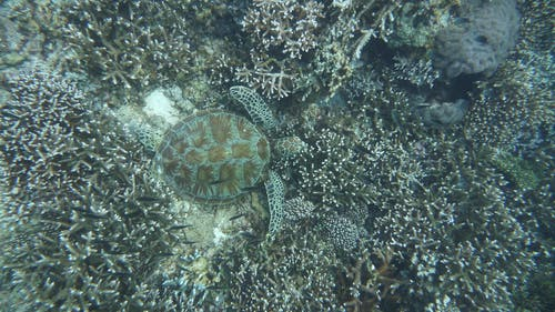 A Turtle Swimming Underwater