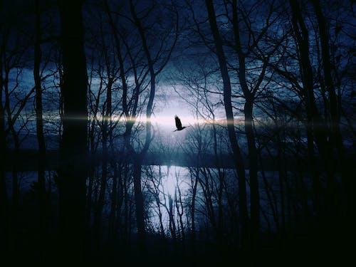 Black Bird Flying over Body of Water