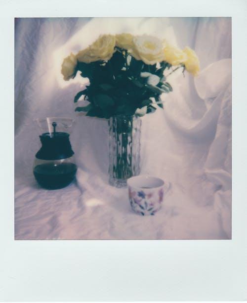 White Roses in White Ceramic Vase