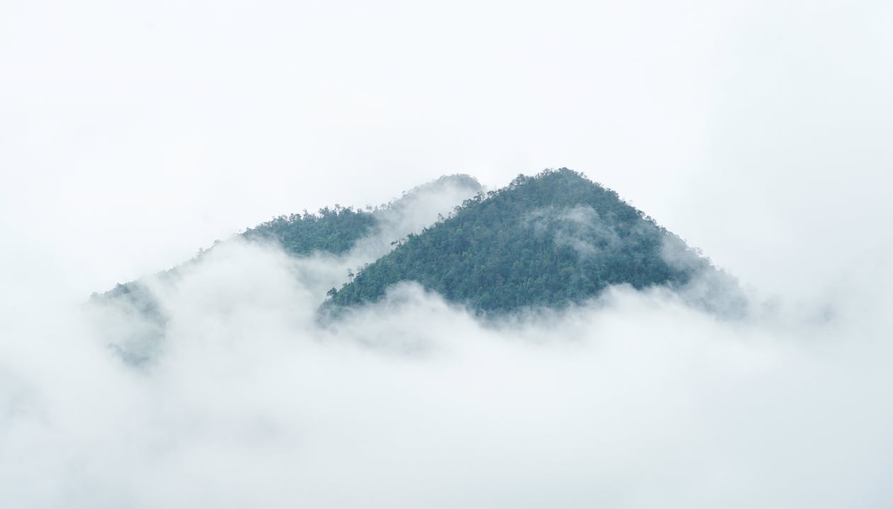 Fog covering mountains with lush trees