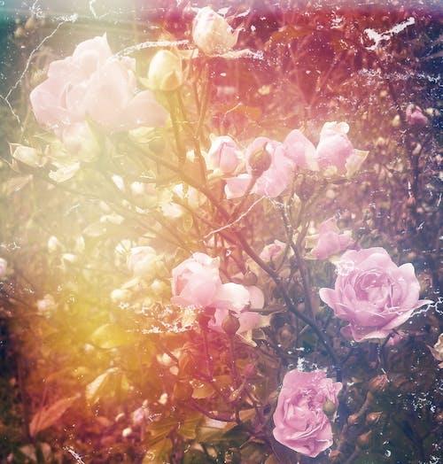 Foto profissional grátis de coçar, flores, jardim, natureza