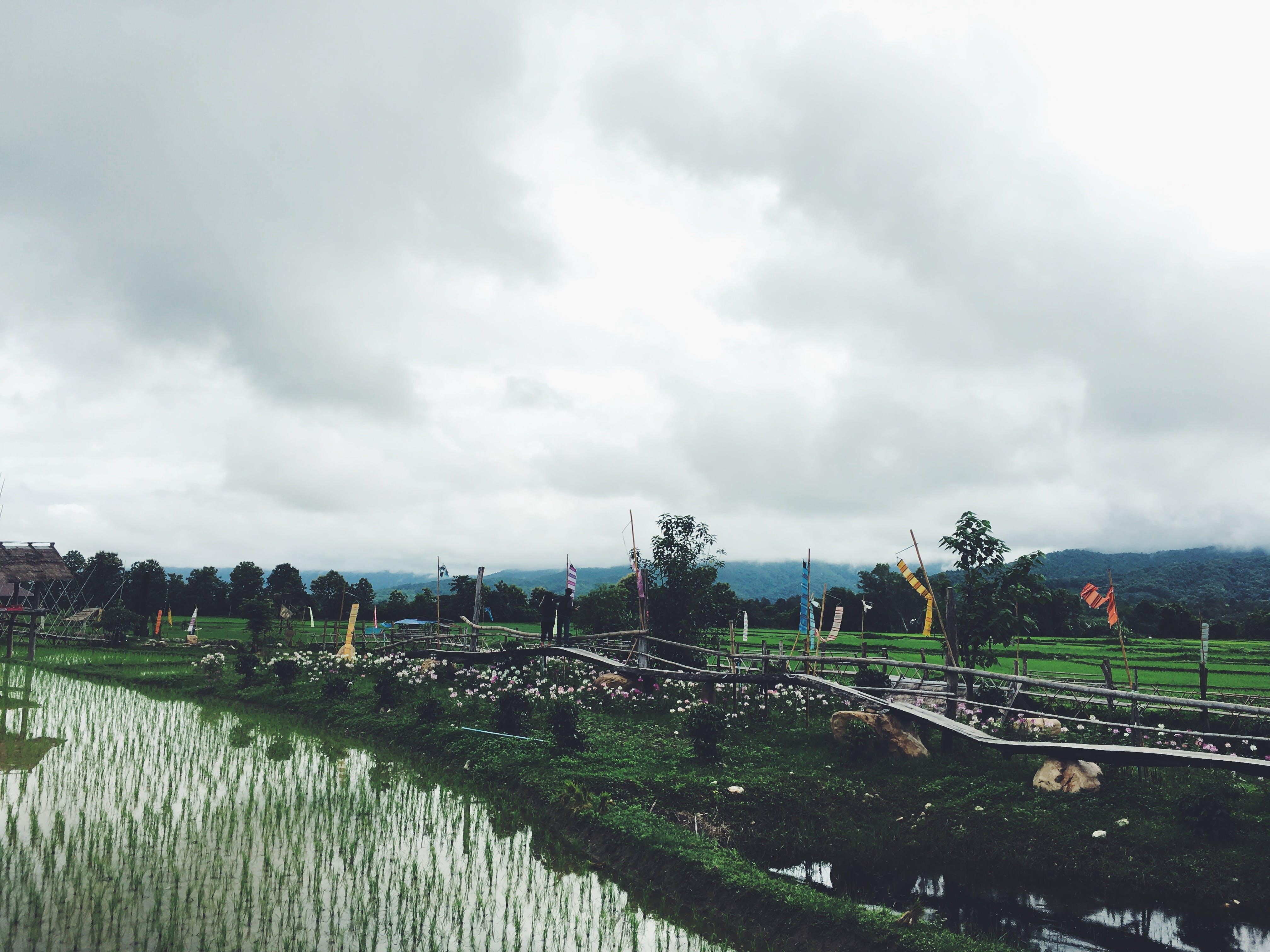 Crop Field Near Wooden Fence