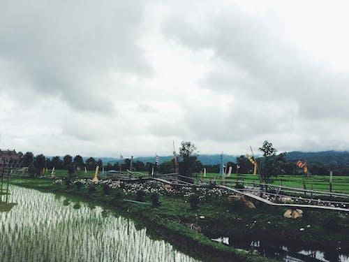 Ingyenes stockfotó ég, fák, farm, felhők témában
