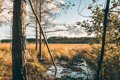 가을, 거친, 건조한의 무료 스톡 사진