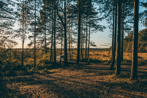 Footpath between overgrown trees on meadows in countryside
