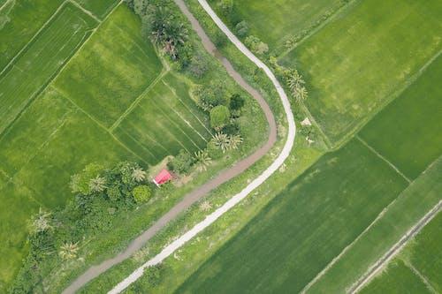 Foto profissional grátis de acordo, aéreo, agricultura