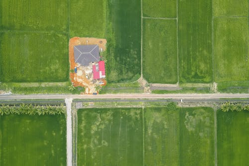 Aerial view of green fields of plants growing along roadway in farmland in countryside