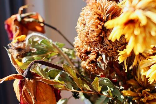 Fotos de stock gratuitas de Acción de gracias, al aire libre, árbol, brillante