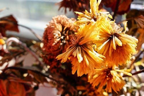 Fotos de stock gratuitas de al aire libre, árbol, brillante, caer